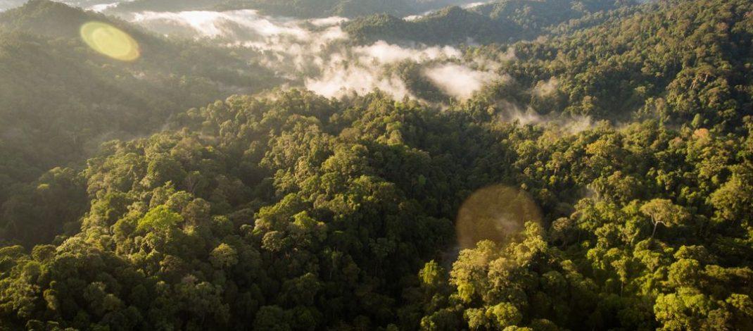 PWI Riau Gelar Ekspedisi Taman Nasional Teso Nilo (TNTN) dan Taman Nasional Bukit Tiga Puluh (TNBT)