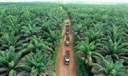 Perkebunan di Atas Lahan HGU Tidak Berikan Kontribusi untuk Daerah